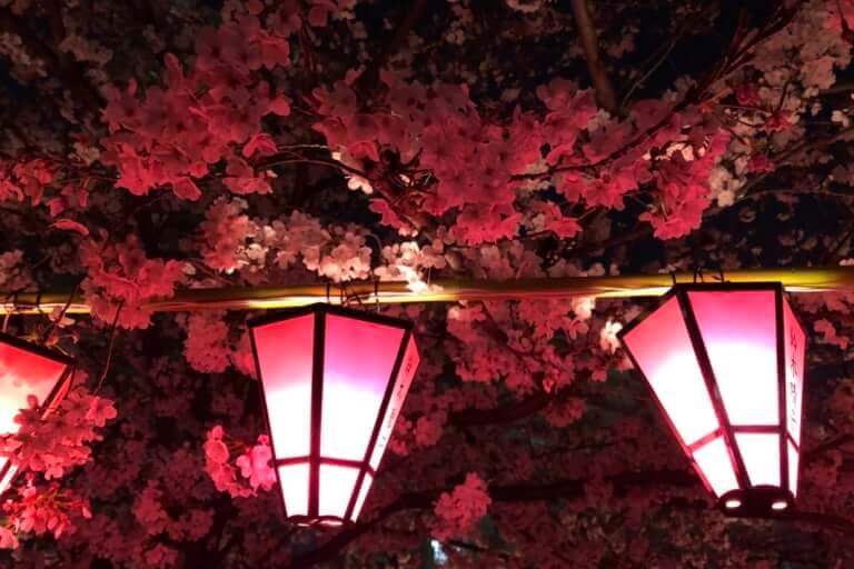 【西区 北堀江】土佐稲荷の桜がほぼ満開です ☻